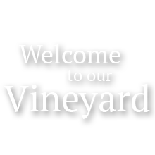 Welcome to our Vineyard